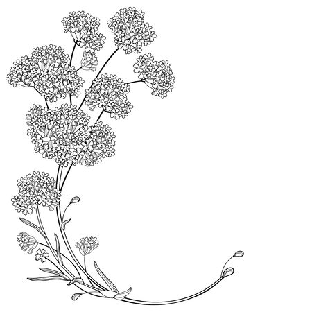 Corner bouquet of outline Verbena flower in black isolated.