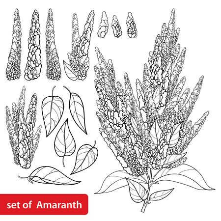 Set with outline Amaranth flower and leaves isolated.