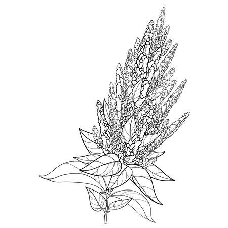 Stem with outline Amaranth flower and leaves isolated. Ilustracja