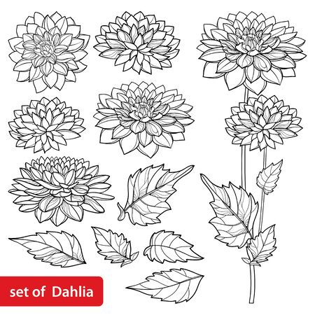 Set with outline Dahlia flower and leaf in black isolated.