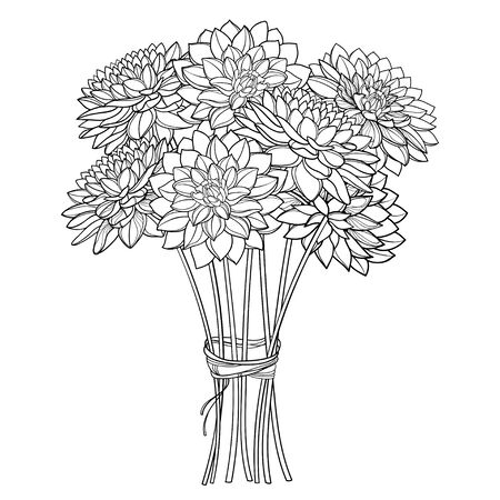 Autumn bouquet with outline Dahlia flower isolated.