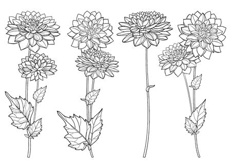 Set with outline Dahlia flower and leaf isolated. Иллюстрация
