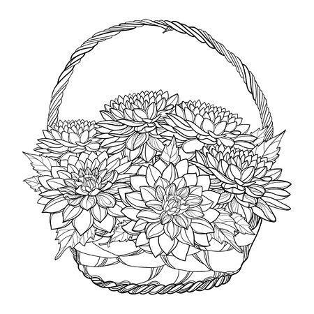 Ramo de otoño con contorno flor de Dalia aislado. Ilustración de vector