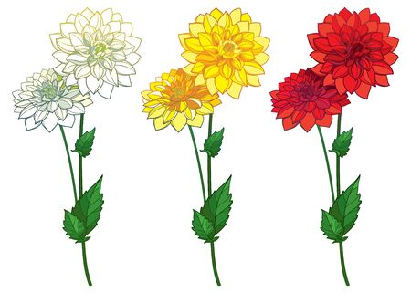 Set with outline Dahlia flower in red and yellow isolated.