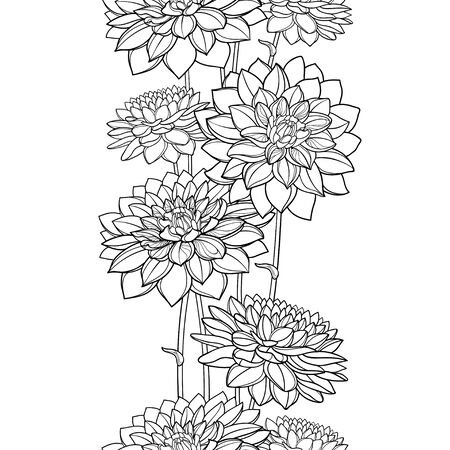 Vertical seamless pattern with outline Dahlia flower.