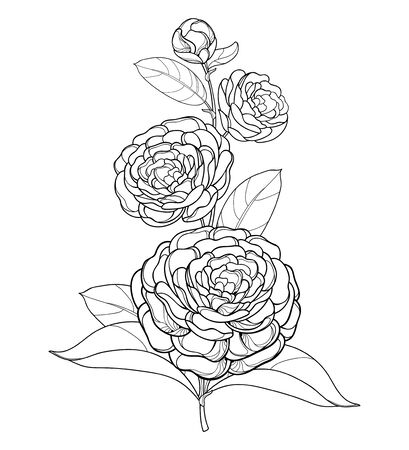 Branch with outline Camellia flower isolated. Векторная Иллюстрация