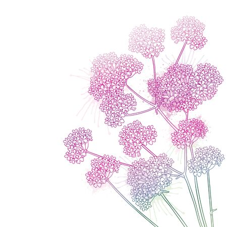 Corner bouquet with outline Verbena in pink isolated. Иллюстрация