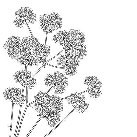 Corner bouquet with outline Verbena in black isolated.