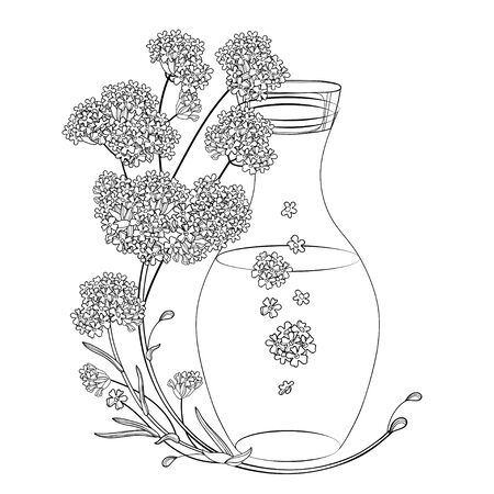 Corner bouquet of outline Verbena flower and bottle essential oil.