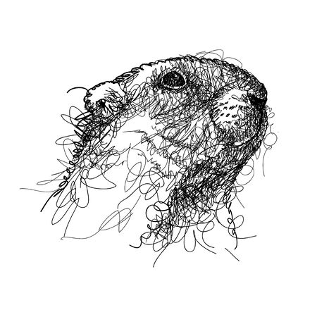 Scribble black groundhog or marmot head isolated.
