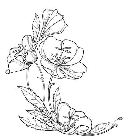 Corner bouquet of Oenothera or evening primrose isolated. Vecteurs