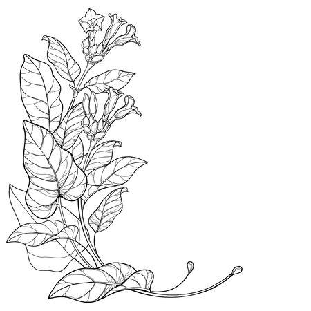 Groupe d'angle avec contour plante de tabac toxique isolé.