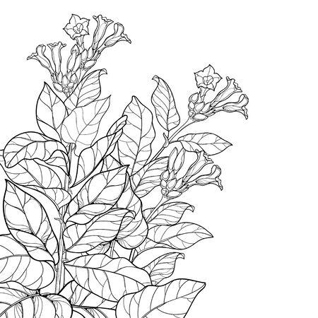 Eckbündel mit der giftigen Tabakpflanze des Umrisses lokalisiert.