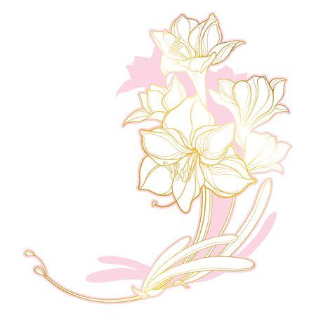 Corner bouquet of outline gold Amaryllis isolated.