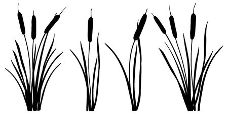 Set of Bulrush, reed or cattail leaves bunch silhouettes isolated.