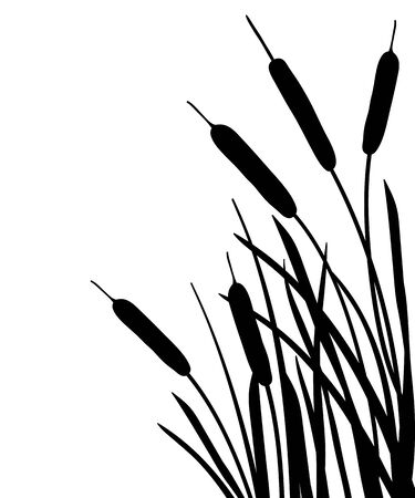 Outline Bulrush, reed or cattail leaves bunch isolated.