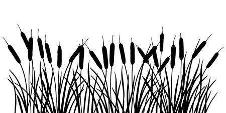 Silhouette of Bulrush, reed or cattail leaves bunch isolated. Ilustração