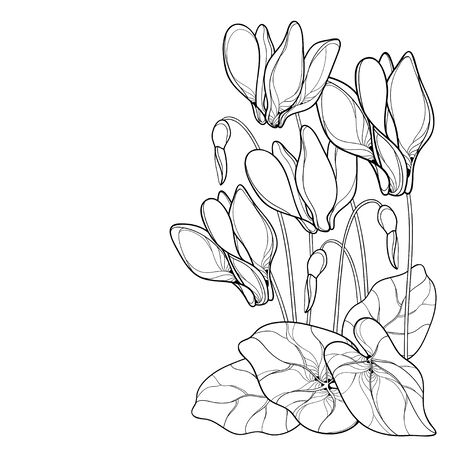 Corner bouquet of outline Cyclamen or Alpine violet isolated.