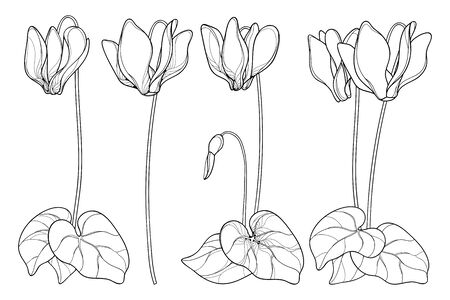 Set of outline Cyclamen or Alpine violet flowers isolated. Vector Illustration