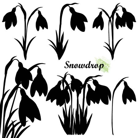 Set of spring Snowdrop flower silhouettes isolated.