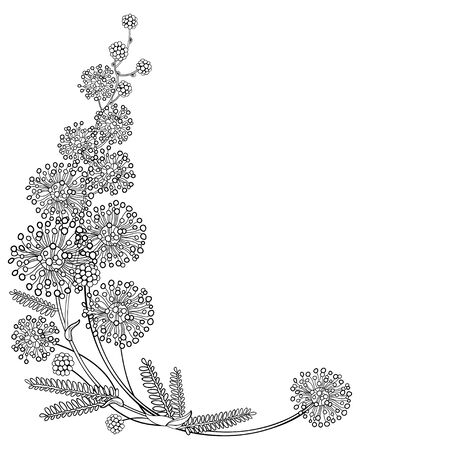 Corner bouquet of outline Mimosa with leaves isolated.