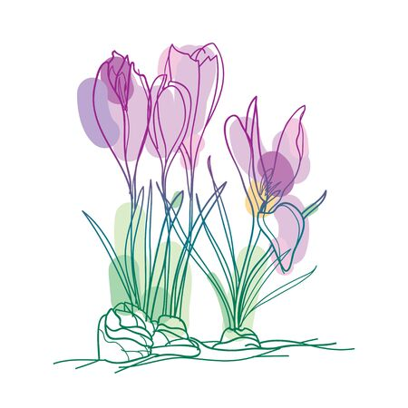 Bouquet with outline Cyclamen or Alpine violet isolated.