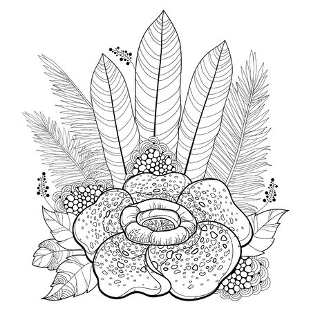 Outline Rafflesia or corpse lily flower in black isolated.