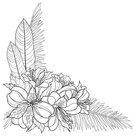 Outline tropical Alstroemeria or Peruvian lily and palm leaf isolated.