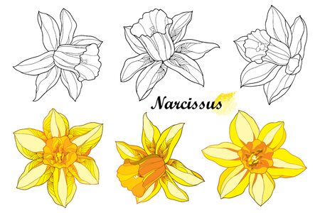 Set of outline narcissus flower in black and yellow isolated.
