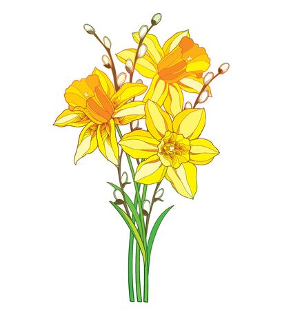 Bouquet with outline yellow narcissus and willow twig isolated. Vettoriali