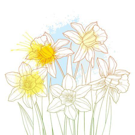 Blumenstrauß mit Umriss-Narzissen- oder Narzissenblüten in Pastellgelb isoliert.