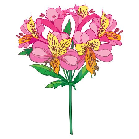 Bouquet of outline tropical Alstroemeria or Peruvian lily isolated.