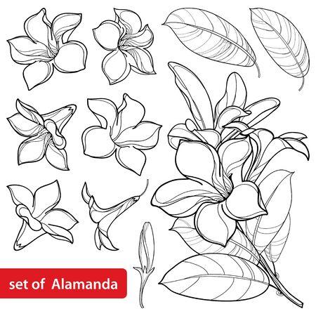 Set of outline tropical Allamanda cathartica flower in black isolated. Vetores