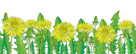 Seamless pattern with outline yellow Dandelion on the white. 向量圖像