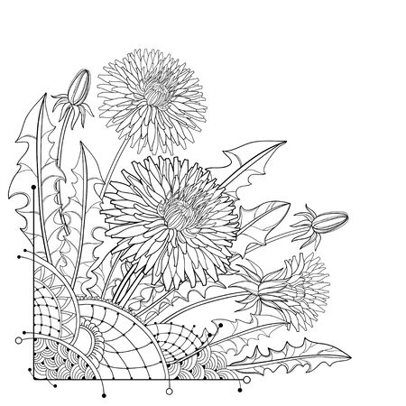 Corner bouquet of outline Dandelion flower, bud and leaves isolated.