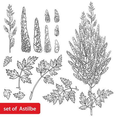 Set with outline Astilbe or false spirea flower bunch isolated.