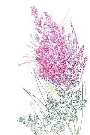 Corner bouquet with outline Astilbe flower bunch isolated.