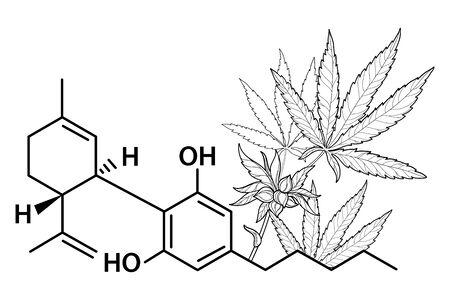 Outline CBD (Cannabidiol) chemical molecule formula with Cannabis. 向量圖像