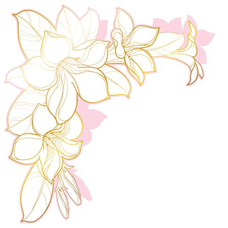 Corner bouquet of outline tropical Allamanda or trumpet flower isolated.
