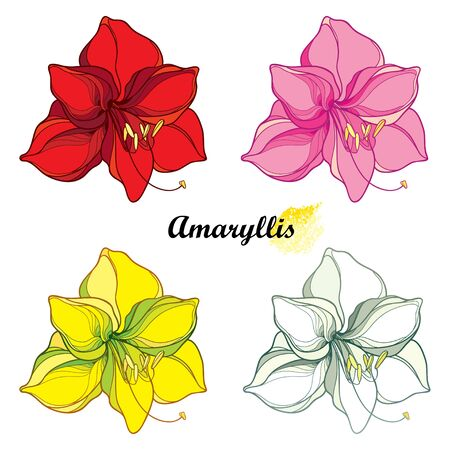 Set of outline tropical open Amaryllis Lily flower isolated.