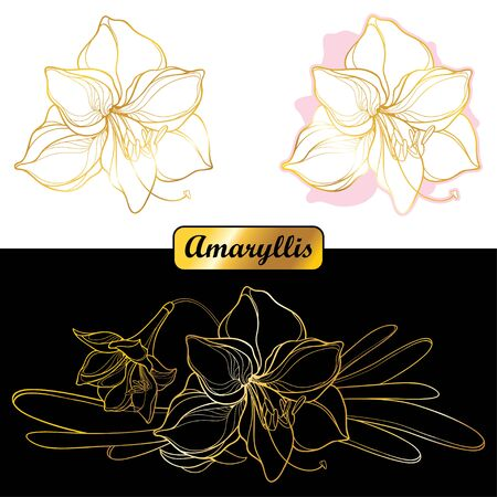Set of outline tropical gold Amaryllis Lily flower isolated. 向量圖像