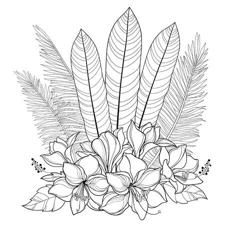 Bouquet of outline Amaryllis lily and palm leaf isolated. 向量圖像