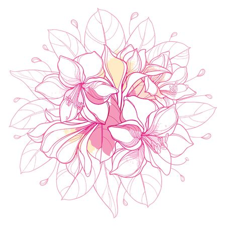 Round pink bouquet of outline Amaryllis lily flower isolated. 向量圖像