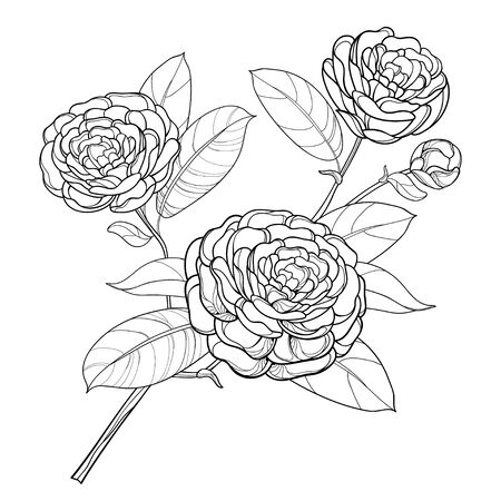 Branch with outline Camellia flower, bud and leaf isolated. 向量圖像