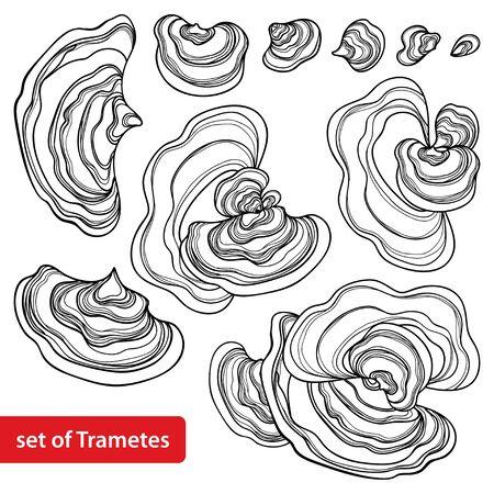 Set of outline Trametes or Turkey tail mushroom isolated. 向量圖像