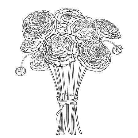 Bouquet of outline Ranunculus or Buttercup flower in black isolated.