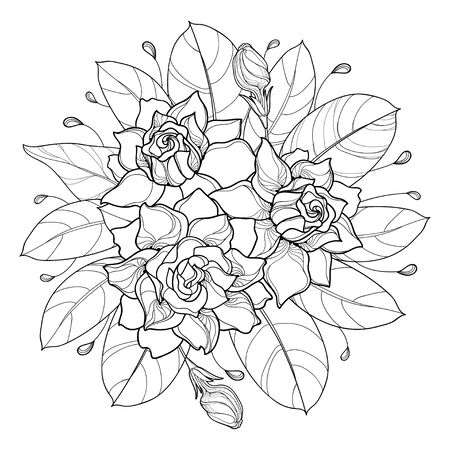 Round bouquet of Gardenia flower and leaf in black isolated. Illustration