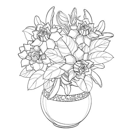 Bouquet of outline Gardenia flower and leaf in round vase isolated.