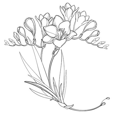 Corner bouquet of outline Freesia flower and leaves in black isolated.