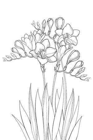 Bouquet of outline Freesia flower, bud and leaves in black isolated.